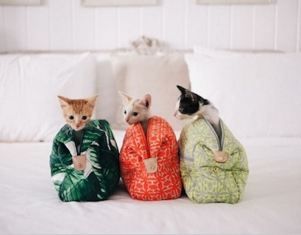India Hicks cats in bags
