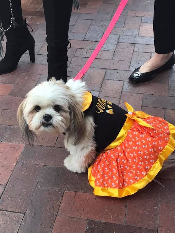 Doggie Fashion show